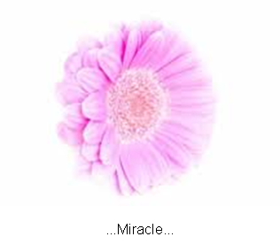 ...Miracle...