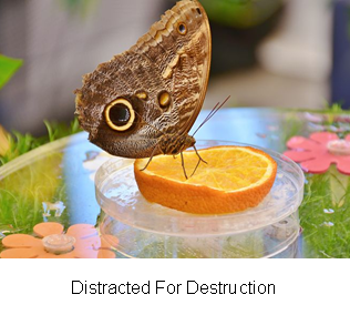 Distracted For Destruction