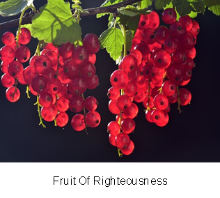 grenepages_Tosin Babalola THE PREVAILING WORD_Fruit Of Righteousness